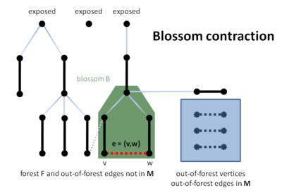 Blossom contraction on line B21