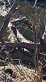 Blue Heron Ayr Mount Hillsborough NC 123517 (31630259130).jpg