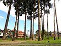 Bogotá Bosque de San Carlos.JPG