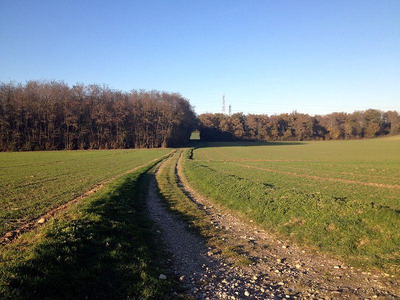 Bois de la Morte à Pizay, anciennement appelé Bois des Communes jusqu'à 1861 et l'assassinat dans ce lieu de Marie-Eulalie Bussod par Martin Dumollard.