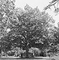 Bomen, hekken, notaris van de ham, Bestanddeelnr 165-0149.jpg