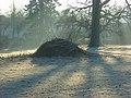 Bonfire, Shottesbrooke - geograph.org.uk - 695697.jpg