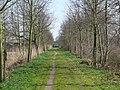 Bornem Barelstraat Jonge Lindendreef (4) - 193308 - onroerenderfgoed.jpg