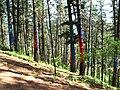 Bosque de Oma (9).JPG