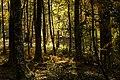 Bosque en Castiñeiras.jpg