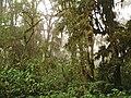 Bosquenublado yungas sanandres salta.jpg