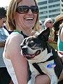 Boston Terrier, Barack Obama Rally, Portland, Oregon (2503560483).jpg