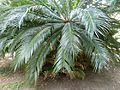 BotanicGardensPisa (54).JPG