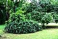 Botanic garden limbe46.jpg