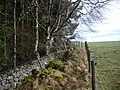 Boundary wall and fence - geograph.org.uk - 1182038.jpg