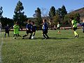Boys U7 soccer game.jpg