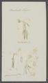 Brachiella thynni - - Print - Iconographia Zoologica - Special Collections University of Amsterdam - UBAINV0274 100 03 0029.tif