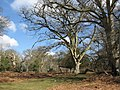 Bratley Wood - geograph.org.uk - 732268.jpg