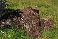 Bretša kivi Osmussaarel.jpg