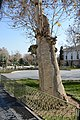 Brick tree درخت آجری.jpg
