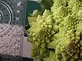 Broccoli DSCN4578.jpg