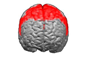 Premotor cortex - Brodmann area 6