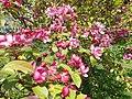 Buda Arboreta. Lower Garden, flowers - 2016 Újbud.jpg