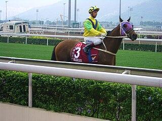 Bullish Luck American-bred Thoroughbred racehorse