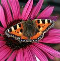 Butterfly (1361999675).jpg