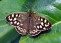Butterfly (3452947976).jpg