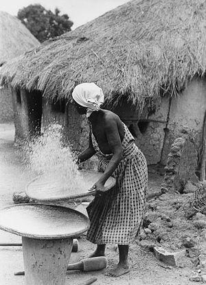 Senufo people - Image: COLLECTIE TROPENMUSEUM Vrouw bezig met het wannen van rijst T Mnr 20012698