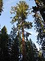 California IMG 4181.jpg