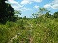 Cambodia 2014 - panoramio (23).jpg