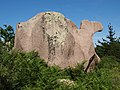 Camel chameau Kamel Dromedar Ploumanach France (15675889859).jpg
