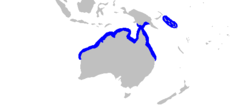 Carcharhinus cautus distmap.png