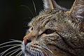 Cat face 02.jpg
