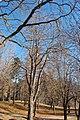Cavalese Park - panoramio.jpg
