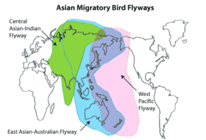 East Asian–Australasian Flyway - Central Asian, East Asian–Australasian, and West Pacific migratory bird flyways
