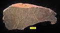 Chaetetid Bird Spring cross-section Upper Carboniferous Nevada.jpg