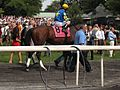 Checklist at True North Stakes.jpg