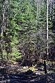 Cherevakha Manevytskyi Volynska-Urochyshche Dzherela nature reserve-creek-1.jpg