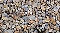 Chesil Beach stones, Dorset, England.jpg