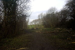 Chesterfield Canal - A section of the canal undergoing restoration