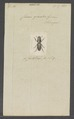 Chiron - Print - Iconographia Zoologica - Special Collections University of Amsterdam - UBAINV0274 019 10 0164.tif
