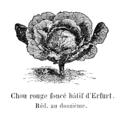 Chou rouge foncé hâtif d'Erfurt Vilmorin-Andrieux 1904.png