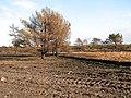Cleared heathland in Kelling Heath - geograph.org.uk - 1749241.jpg