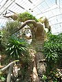 Cleveland Botanical Garden - baobab.jpg