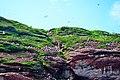 Cliff on Bonaventure Island - panoramio.jpg