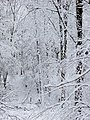 Cloaked in white - January 2013 - panoramio.jpg