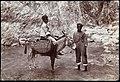 Collectie Nationaal Museum van Wereldculturen TM-60062268 Twee jongens en een ezel bij de Cane river Jamaica J.W.C. Brennan (Fotograaf).jpg