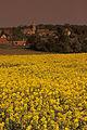 Colza Prunay en Yvelines Cl J Weber01 (23592605151).jpg