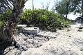 Conchs - panoramio.jpg