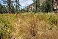 Continental Divide Trail - Flickr - aspidoscelis (37).jpg