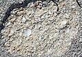 Coquina (Anastasia Formation, Pleistocene or Holocene; Cayo Costa Island, Florida, USA) (26032505336).jpg