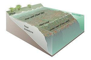 Fringing reef - Diagram of a fringing coral reef